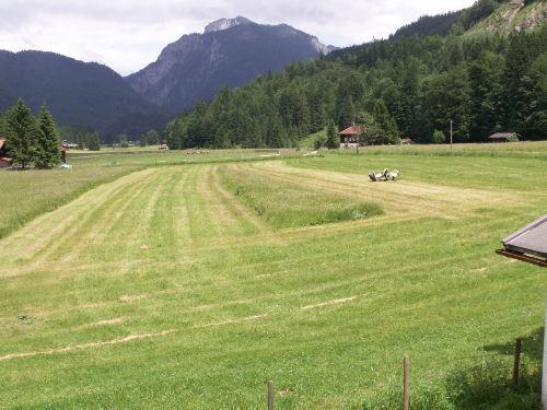Blick auf Sommerwiesen