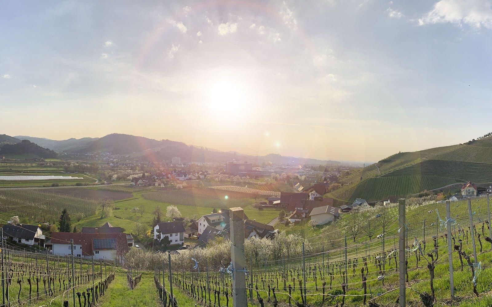 Blick von den Weinbergen über Oberkirch