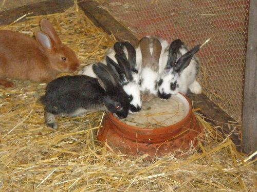 viele kleine Hasen...