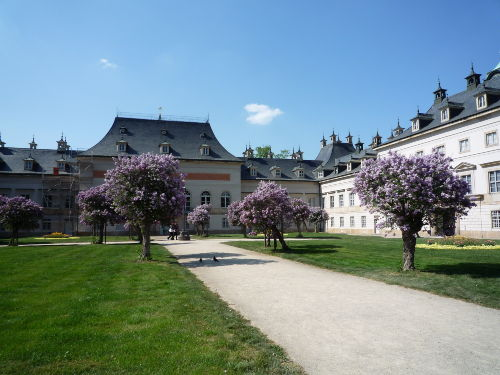 Fliederblüte Schloss Pillnitz
