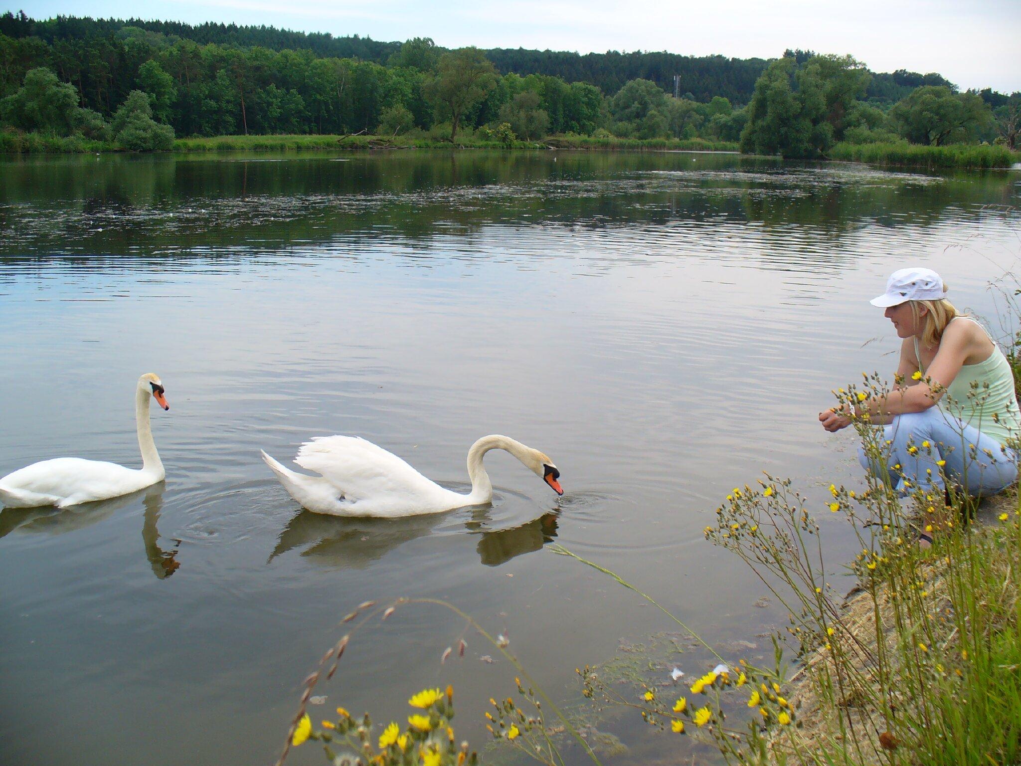 Donau mit seinen Auwäldern
