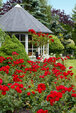 ein Rosentraum!