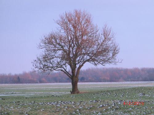 Mein Freund der Baum,immer wieder schön,