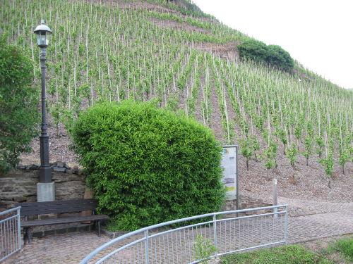 """Sommer im Weinberg """"Palmberg Terrassen"""""""