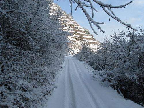 """Winter im Weinberg """"Palmberg Terrassen"""""""