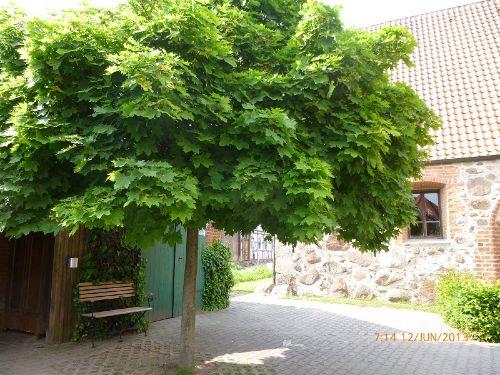 Zusatzbild Nr. 09 von Wendlandferienhaus - Ferienwohnung Rundling