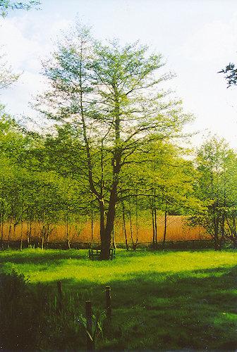 Gartenansicht mit Lebensbaum