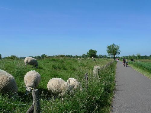 schön Fahrradfahren und spazieren......
