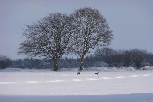 Winteridylle in unmittelbarer Umgebung