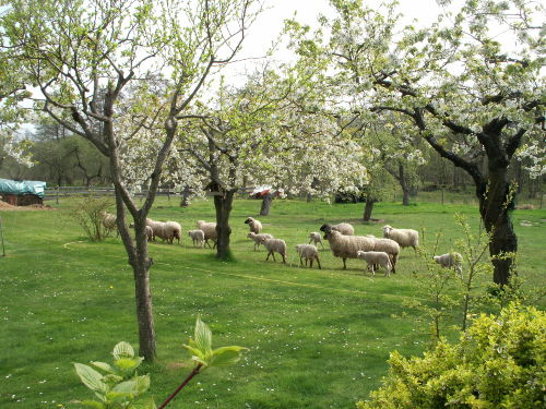 Obstgarten im Frühjahr