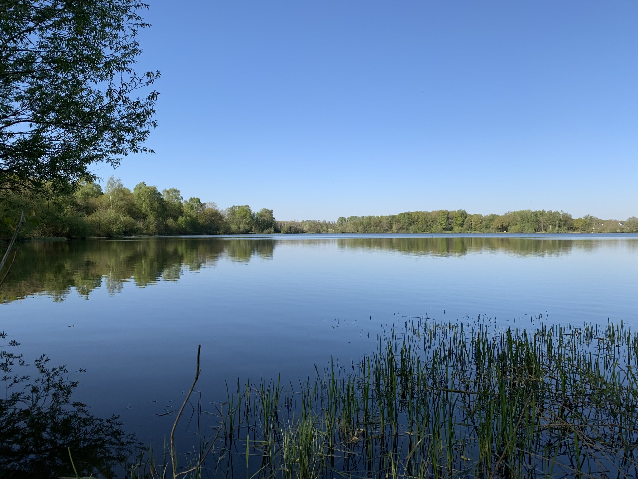 Haselünner See
