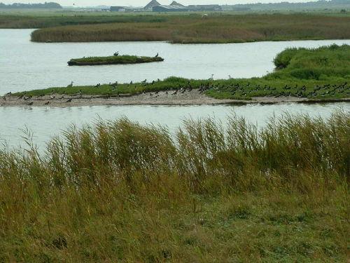 Naturschutzgebiet mit Brutplätzen