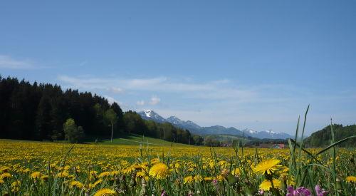 Blick vom Ferienpark nach Siegsdorf