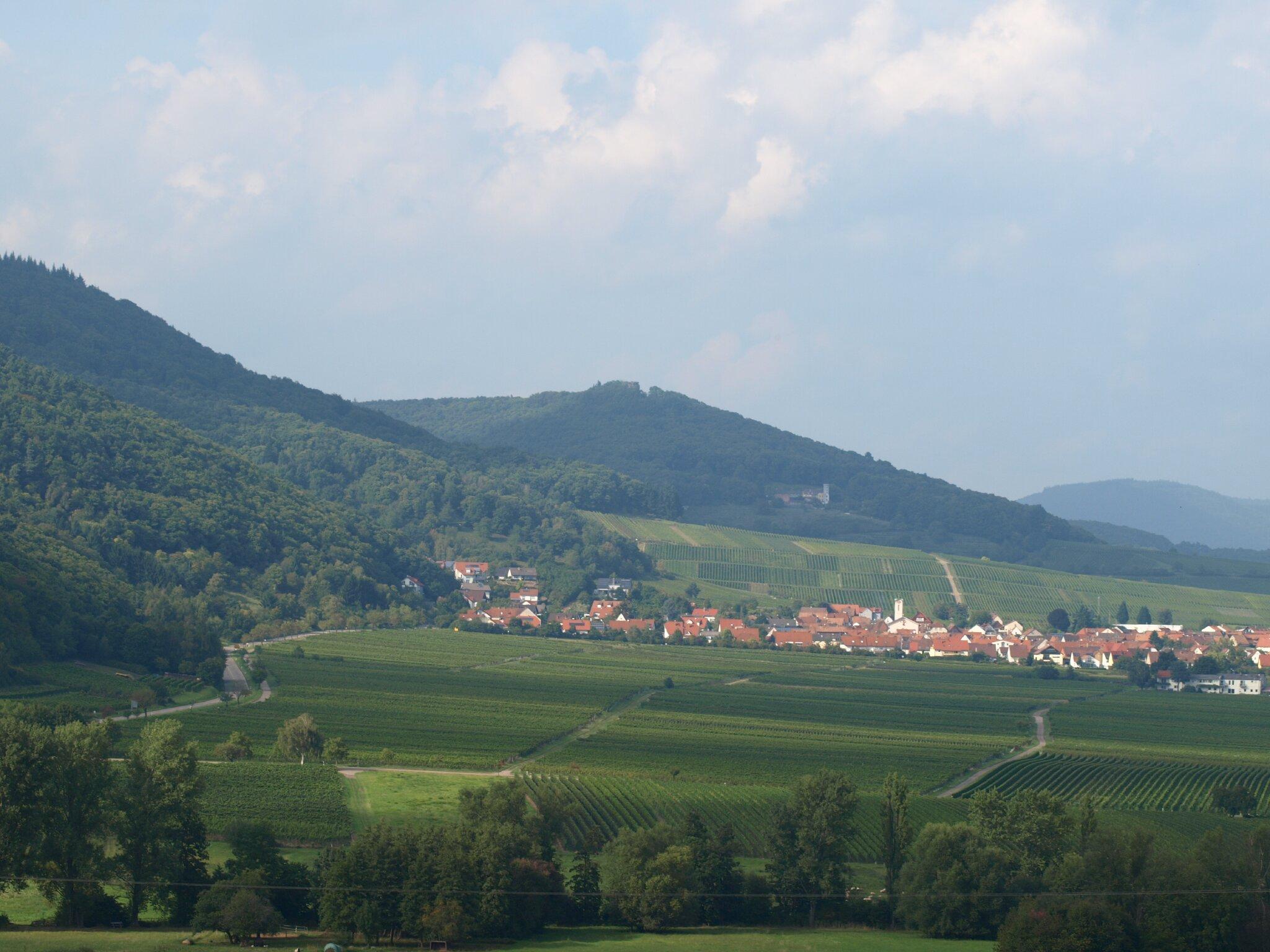 Weinberge/Pfälzer Wald
