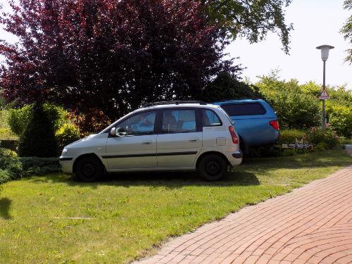 Evi Opp's Rosen in voller Blütenpracht