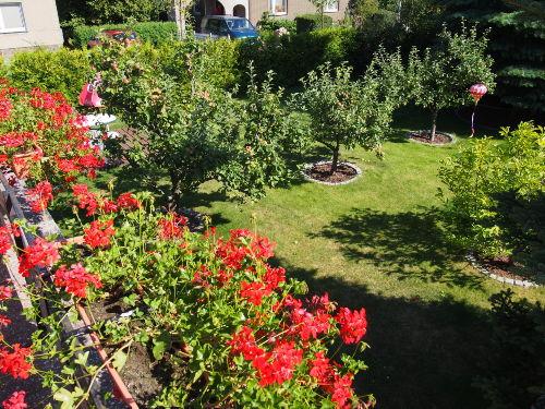 Blick in den gepflegten Garten