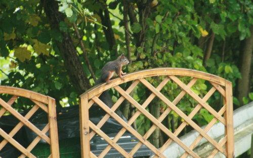 Besuch vom Eichhörnchen