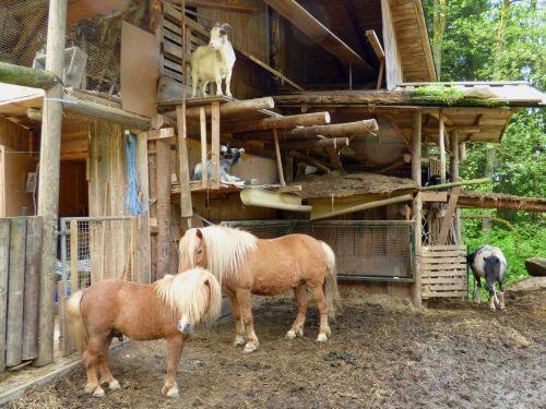Tiere rund um die Hütten Pferde, Ziegen