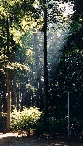 Heiligendammer Wald