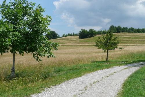 Spaziergang zum K�nigsberg hint.Breitbr.