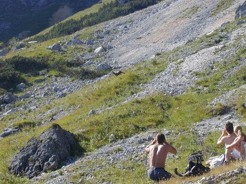 WILD gehts zu in unseren Bergen