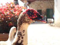 Bauernhof Bigongiari - Ferienwohnung Rosina in Lucca - kleines Detailbild