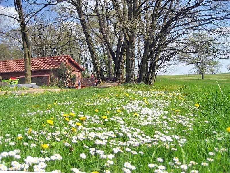 der Ferienhof umgeben von Bäumen/Wiesen