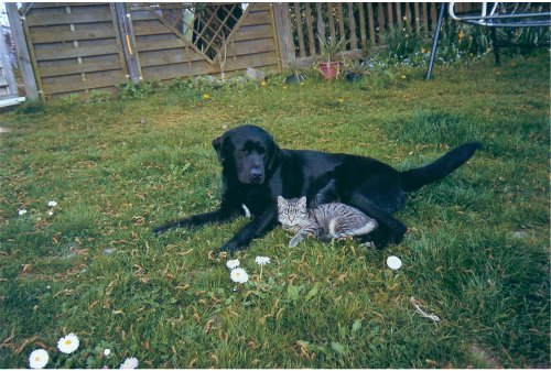 unser Hund Ayla mit Dimitri