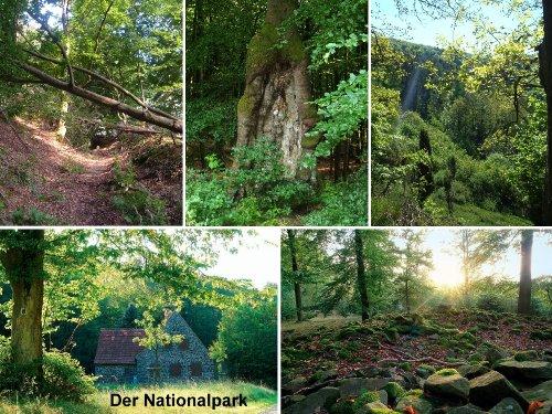 """Nationalpark """"Kellerwald-Edersee"""""""