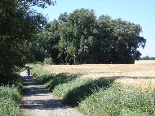 Radweg zwischen Gustow und Altefähr