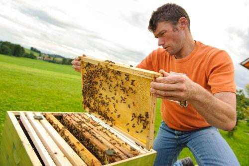 in die Bienen zu schauen ist spannend