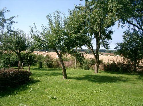 Obstbaumgarten