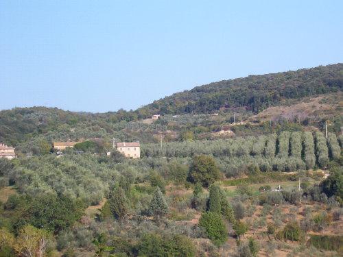 Pascianella eingebettet in Olivenbäume