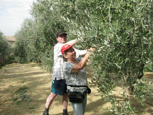 Unsere Gäste bei der Olivenernte