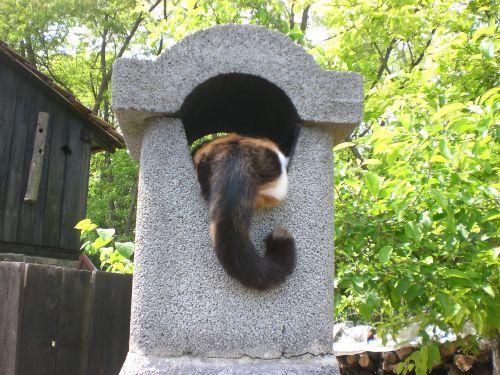 ein Plätzchen im Kamin....