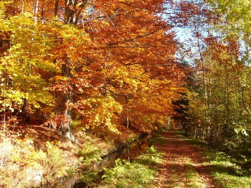 Herbstzeit / Umgebung Antonsthal
