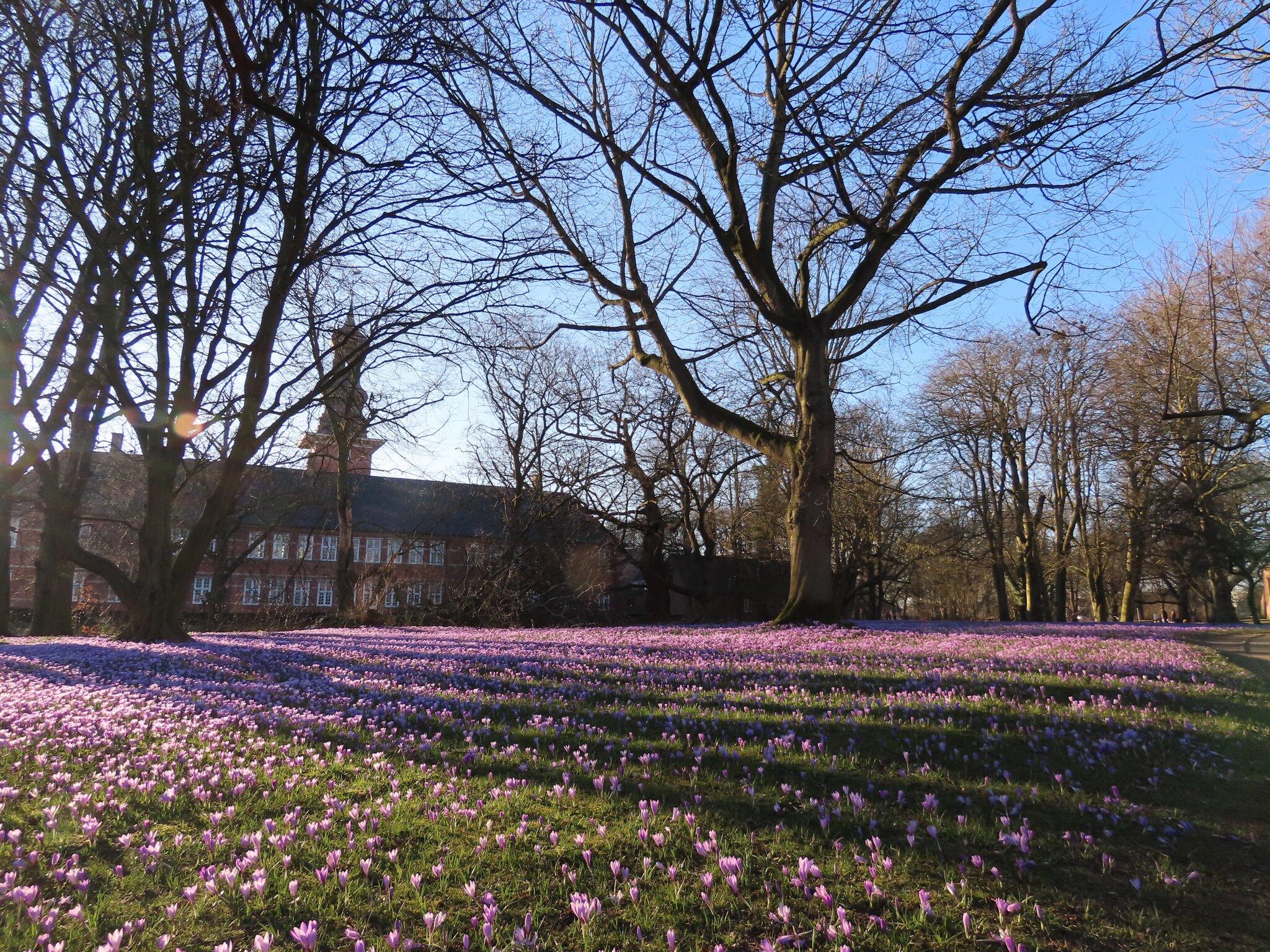 Salzwiesen im Wattenmeer