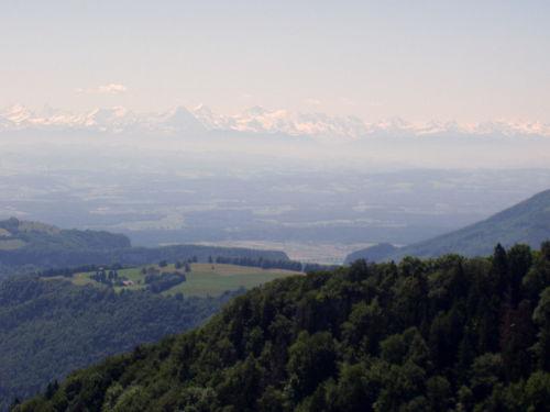 Vom Jura Blick auf das Berner Oeberland