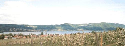 Blick auf den See aus den Obstanlagen