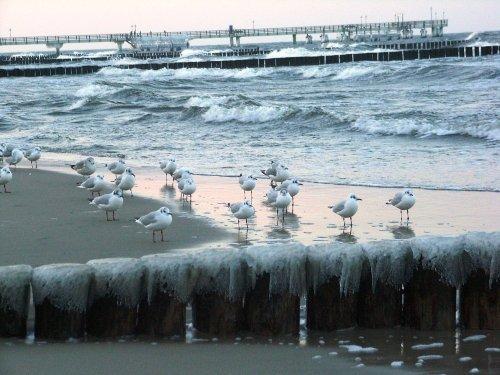 Ostsee - nur 400m entfernt
