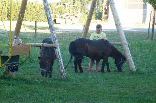 Die Kinder beim Pony putzen