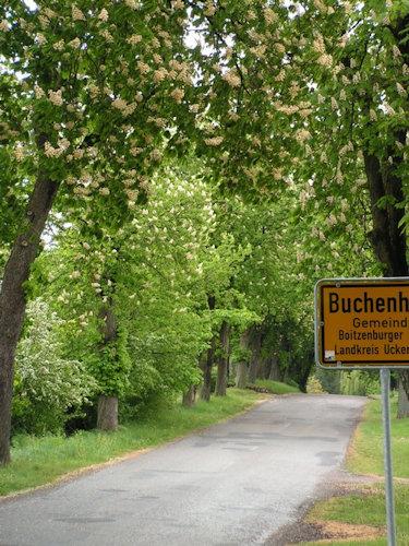 Willkommen in Buchenhain!