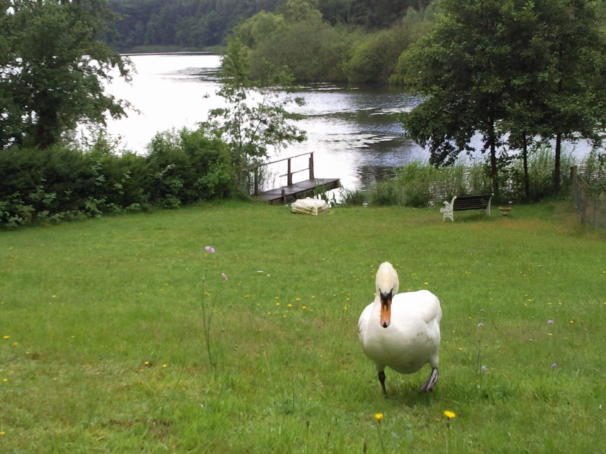 Blick vom Bootsteg auf den See