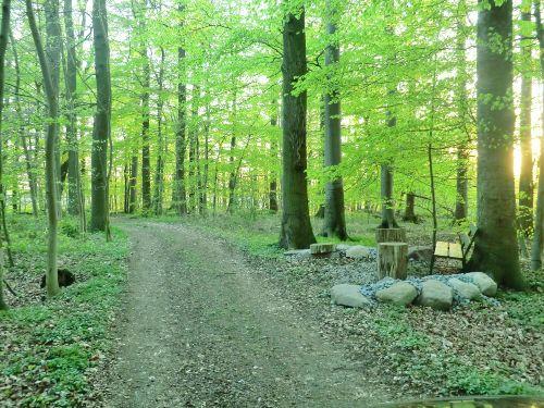 herrliche Ruhe in unserem Wald