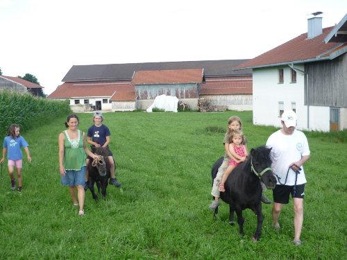 Ponys zum sparzieren gehen