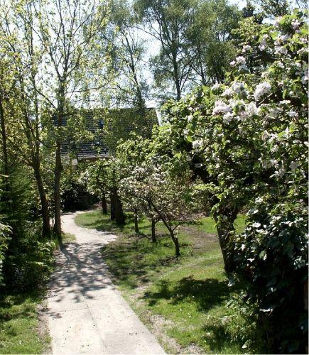 Bl�hende Obstbaume
