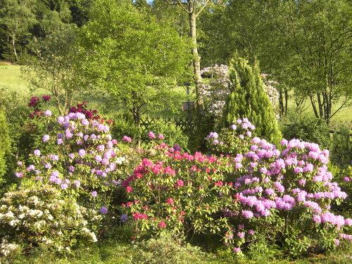 FW. Rose Garten