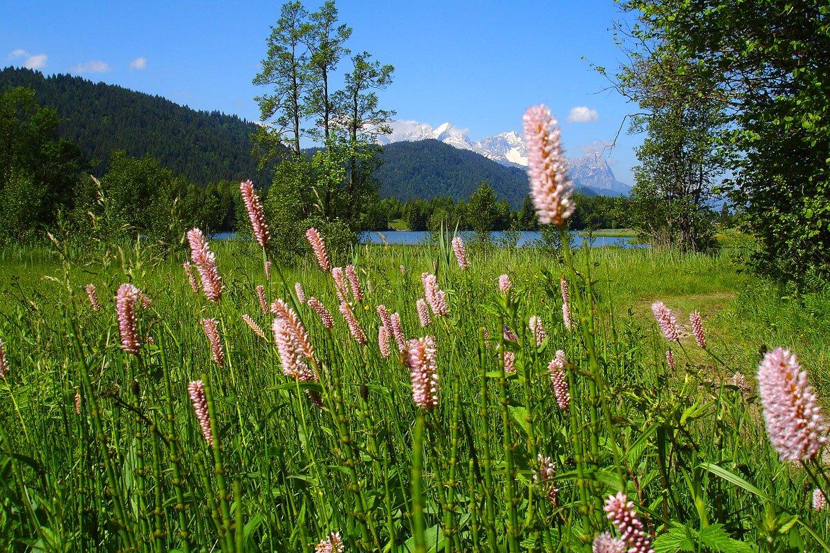 Zusatzbild Nr. 09 von Haus Alpenflora - Ferienwohnung 2