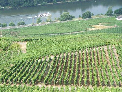 die Weinbergen und die Mosel