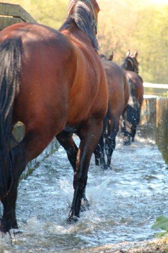 Kneippkur setzt Pferdestärken frei.